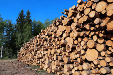 Harvesting timber logs