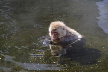 Makake in den japanischen Alpen