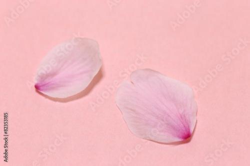 桜の花びら ピンクの背景