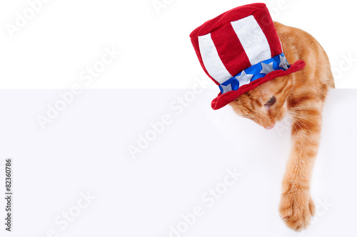 Papiers peints Porter Patriotic cat holding up sign