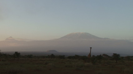 A zoom out of a giraffe on the hills of mt kilimanjaro