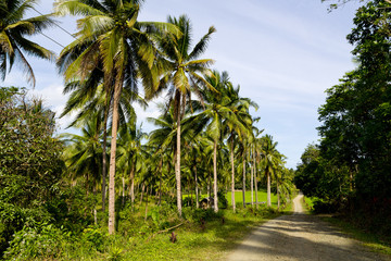 Rural Country Road in Puerto Princesa, Palawan, Philippines