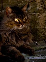 cat (69)