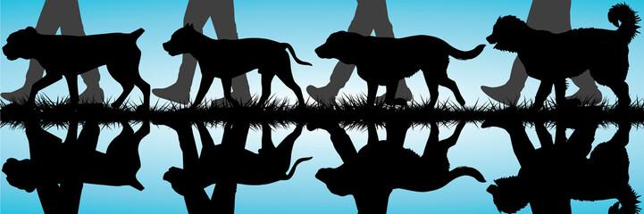 Amstaff, Presa Canario, Labrador and Caucasian Shepherd silhouet