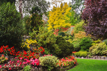 Flower beds of colorful flowers