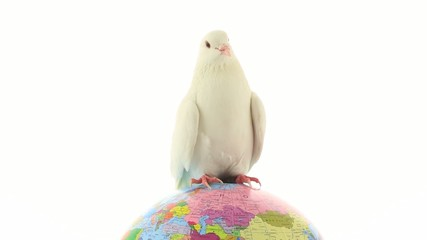 white pigeon on the globe an earth symbol