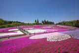 一面に咲く芝桜(埼玉 羊山公園) - 82377797