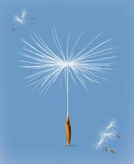 Dandelion seeds, vector icon
