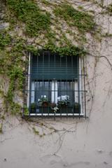 Finestra con inferiate con rampicanti, esterno