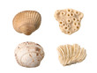Seashells and corals isolated on the white background - 82383125