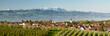 Bodenseepanorama mit Säntis - 82383962