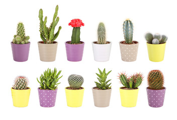 Cactus collection isolated. Aloe and succulents in ceramic pots