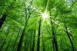 Fototapeta sun shining through tree branches