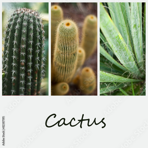 Poster composition cactus