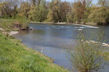 Fischreiher am Fluss