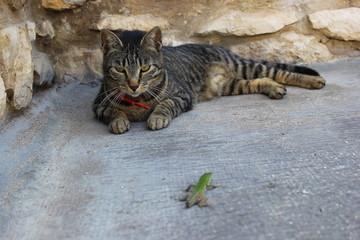 Katze liegt auf der Lauer: Eidechse als Opfer