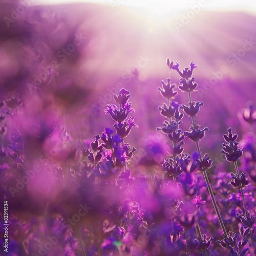 Fotobehang Lavendel field lavender flowers