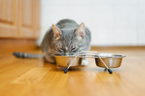 young cat eating food from a plate