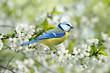 Leinwanddruck Bild - Frühling 334