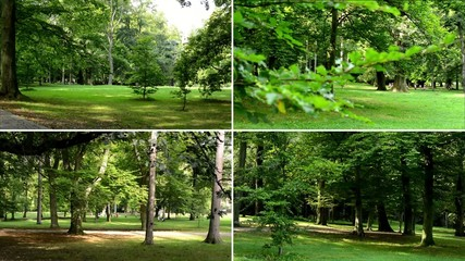 montage - park (trees) - sunny - grass