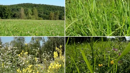 montage - nature (meadow with flowers) and grass - forest in ba