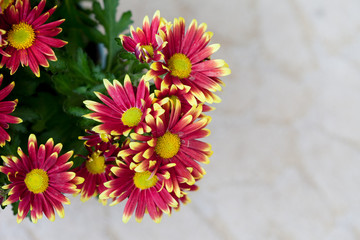 Beautiful spring red and yellow flower