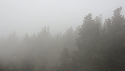 Forest in thick fog mountains - Pico del teide , Canary islands