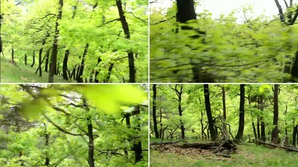 montage - forest - steadicam - walking and running in forest