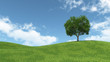 landscape with isolated tree on green meadow - 82426148