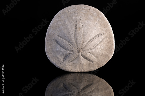 Fototapeta Sand dollar with reflection and black background