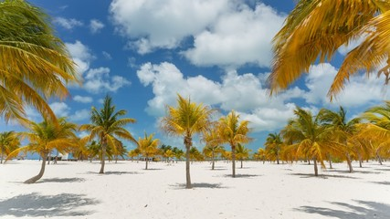 Time Lapse Palm trees at the Sirena beach at Cayo Largo