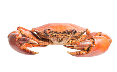 streamed crab isolated on white
