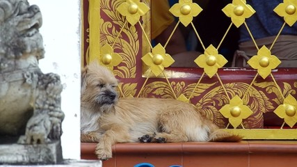 little dog is resting on the stairs of the temple