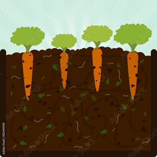 Planting carrots and compost - 82444598