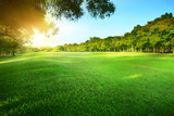 Fototapety beautiful morning sun shining light in public park with green gr