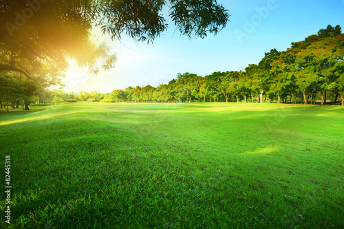 Papiers peints Jardin beautiful morning sun shining light in public park with green gr