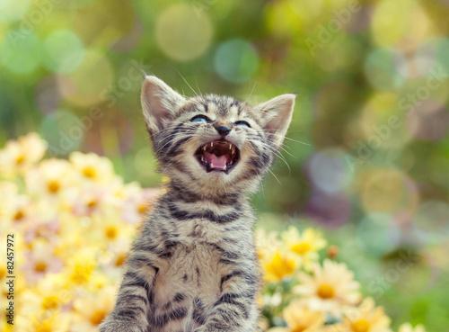 Cute little meowing kitten in the garden