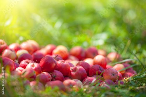 mata magnetyczna Czerwone jabłka na trawie w słoneczny dzień