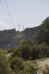 Elektrik Direkleri ve Orman