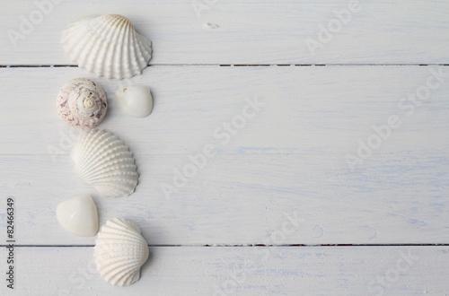 White Sea Shells - 82466349