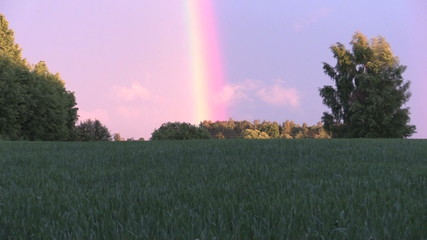 Agriculture field plants and rainbow in sky. Zoom out