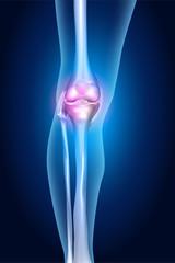 Healthy human leg, knee anatomy, bright design