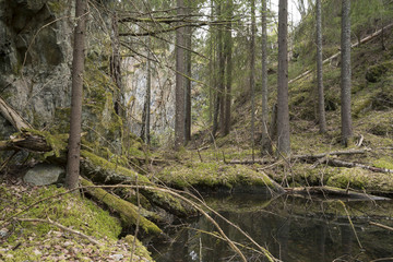 Forest area in sweden with pines, high rocks and water
