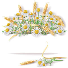 Banner with Wild Chamomile  and Wheat EarsBunch.