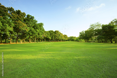 Foto op Canvas Tuin beautiful morning light in public park with green grass field an