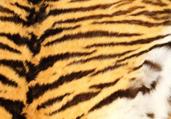 detailed texture of real tiger fur