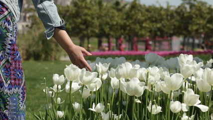 woman's hand gently touching a white tulips in the spring park