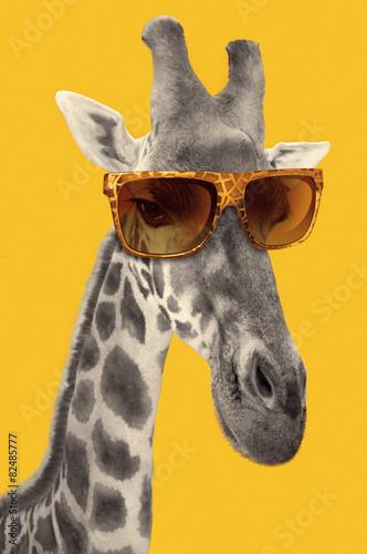 Fototapeta Portrait of a giraffe with hipster sunglasses
