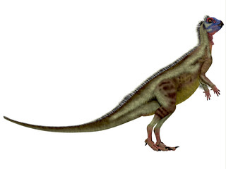 Hypsilophodon over White