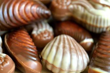 Chocolate candies shaped like seashell and seahorse